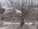 東長寺の庭(菩提樹)