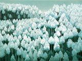 北山初雪(新木版)