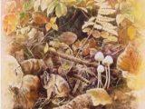 秋の香2002(売却済み)